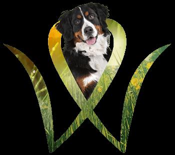 Hundefutter-Spezialitäten